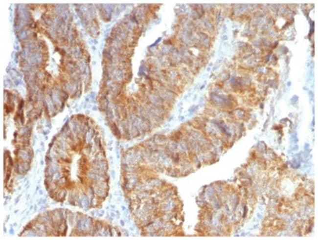 TL1A/TNFSF15 Mouse anti-Human, Clone: VEGI/1283, Novus Biologicals::