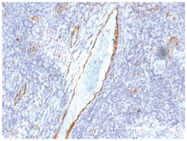 vWF-A2 Mouse anti-Human, Clone: F8/86- Azide and BSA Free, Novus Biologicals::