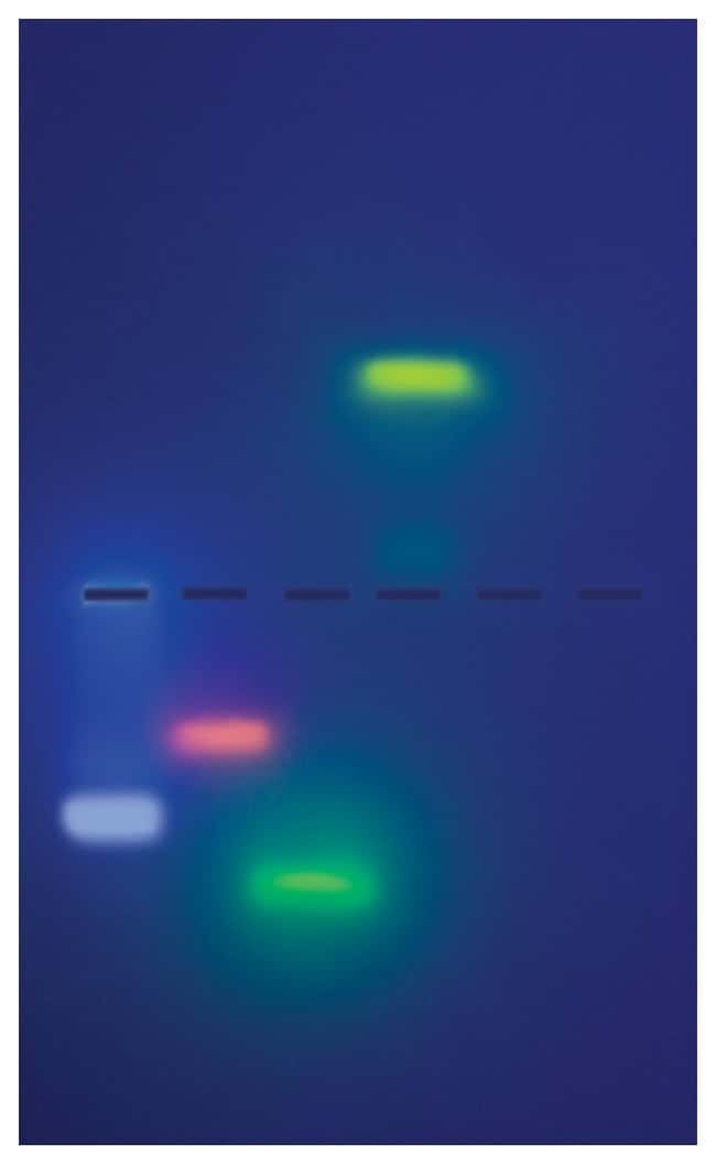 Edvotek&trade;&nbsp;In Search of the Invisible DNA: A Genetics Exploration&nbsp;<img src=
