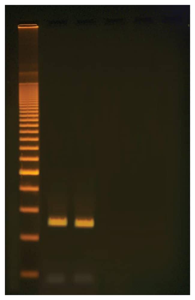 Edvotek&trade;&nbsp;Quick PCR&nbsp;<img src=