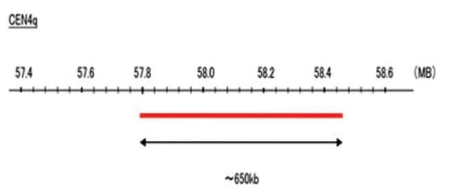 Abnova CEN4q (DEAC) FISH Probe 1 Set:Life Sciences