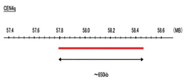 Abnova CEN4q (Cy5) FISH Probe 1 Set:Life Sciences