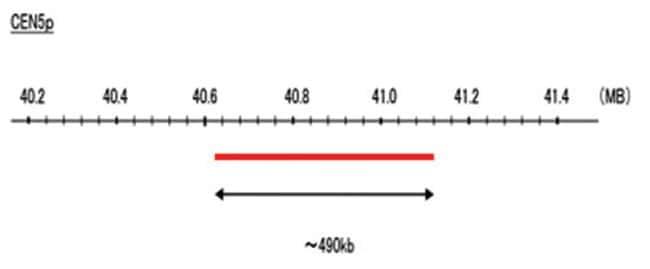 Abnova CEN5p (DEAC) FISH Probe 1 Set:Life Sciences