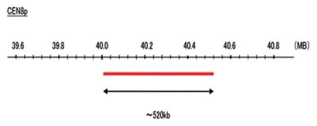 Abnova CEN8p (FITC) FISH Probe 1 Set:Life Sciences