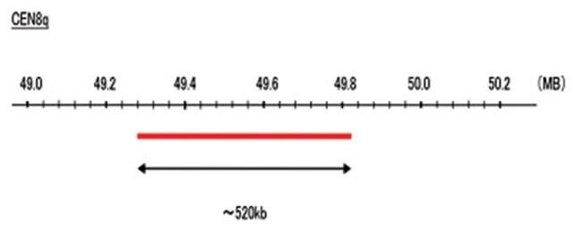 Abnova CEN8q (R6G) FISH Probe 1 Set:Life Sciences