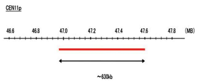 Abnova CEN11p (R6G) FISH Probe 1 Set:Life Sciences