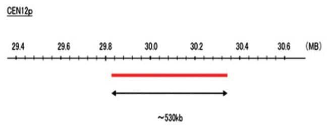 Abnova CEN12p (Texas Red) FISH Probe 1 Set:Life Sciences