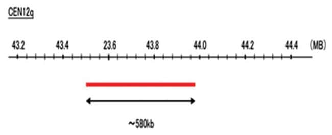 Abnova CEN12q (Cy5) FISH Probe 1 Set:Life Sciences