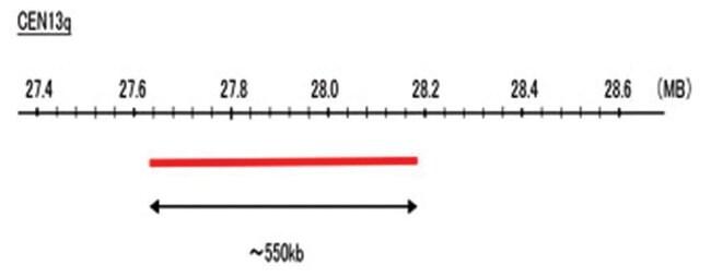 Abnova CEN13q (R6G) FISH Probe 1 Set:Life Sciences