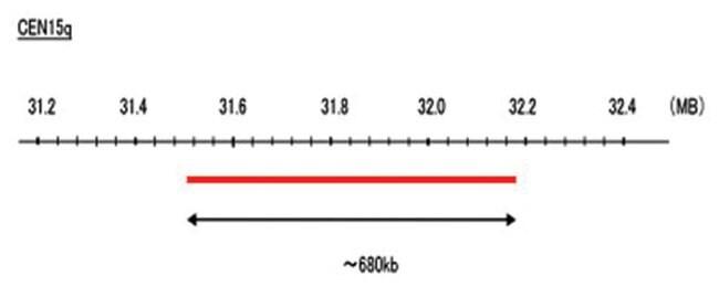 Abnova CEN15q (Cy5) FISH Probe 1 Set:Life Sciences
