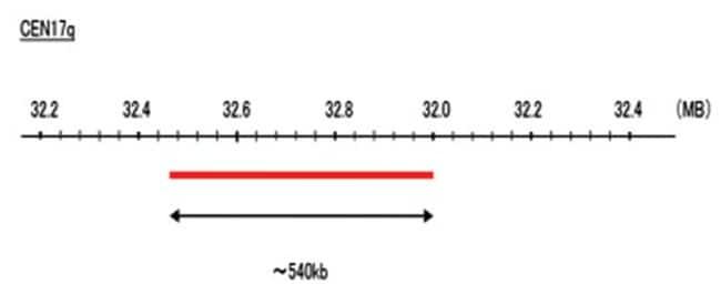 Abnova CEN17q (DEAC) FISH Probe 1 Set:Life Sciences