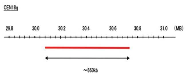 Abnova CEN18q (Cy5) FISH Probe 1 Set:Life Sciences