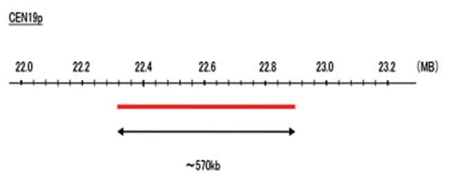 Abnova CEN19p (FITC) FISH Probe 1 Set:Life Sciences