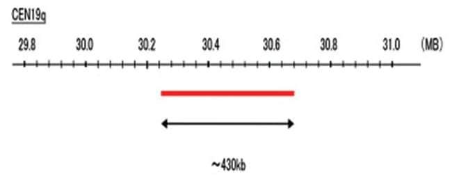 Abnova CEN19q (Texas Red) FISH Probe 1 Set:Life Sciences