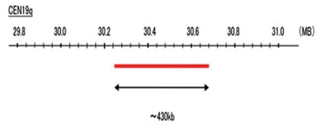 Abnova CEN19q (DEAC) FISH Probe 1 Set:Life Sciences