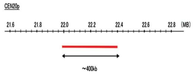 Abnova CEN20p (R6G) FISH Probe 1 Set:Life Sciences