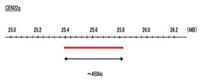 Abnova CEN22q (R6G) FISH Probe 1 Set:Life Sciences