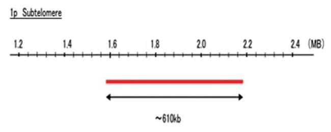 Abnova 1p Subtelomere (R6G) FISH Probe 1 Set:Life Sciences