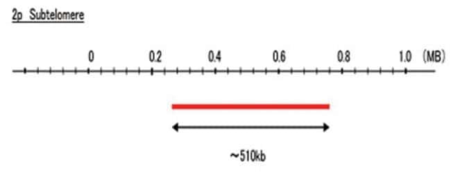 Abnova 2p Subtelomere (Cy5) FISH Probe 1 Set:Life Sciences