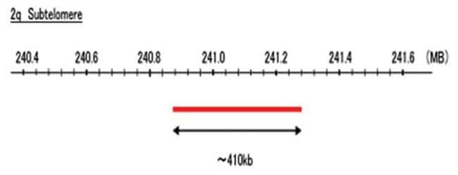 Abnova 2q Subtelomere (R6G) FISH Probe 1 Set:Life Sciences
