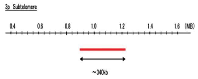 Abnova 3p Subtelomere (R6G) FISH Probe 1 Set:Life Sciences