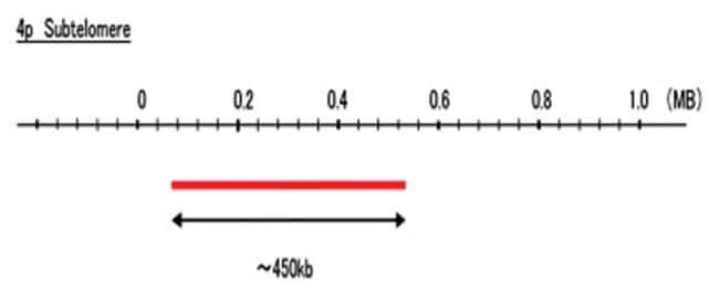 Abnova 4p Subtelomere (DEAC) FISH Probe 1 Set:Life Sciences