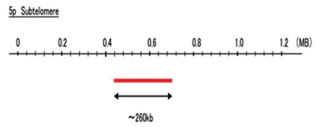 Abnova 5p Subtelomere (DEAC) FISH Probe 1 Set:Life Sciences