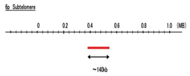 Abnova 6p Subtelomere (FITC) FISH Probe 1 Set:Life Sciences