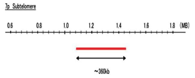 Abnova 7p Subtelomere (R6G) FISH Probe 1 Set:Life Sciences