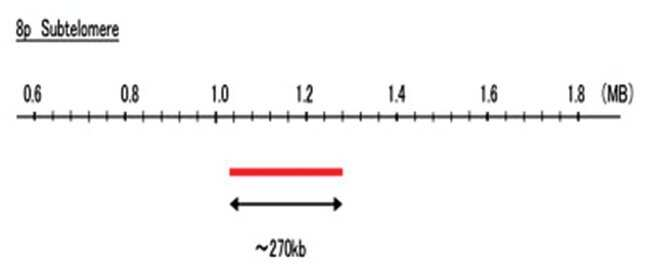 Abnova 8p Subtelomere (FITC) FISH Probe 1 Set:Life Sciences