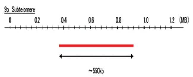Abnova 9p Subtelomere (FITC) FISH Probe 1 Set:Life Sciences