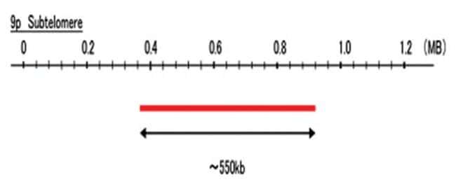 Abnova 9p Subtelomere (Cy5) FISH Probe 1 Set:Life Sciences