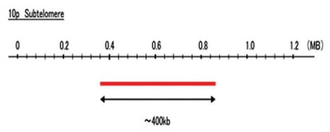 Abnova 10p Subtelomere (FITC) FISH Probe 1 Set:Life Sciences