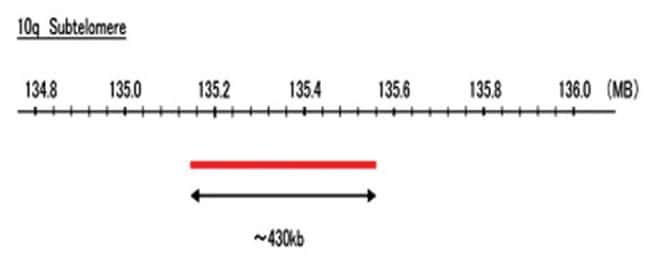 Abnova 10q Subtelomere (DEAC) FISH Probe 1 Set:Life Sciences