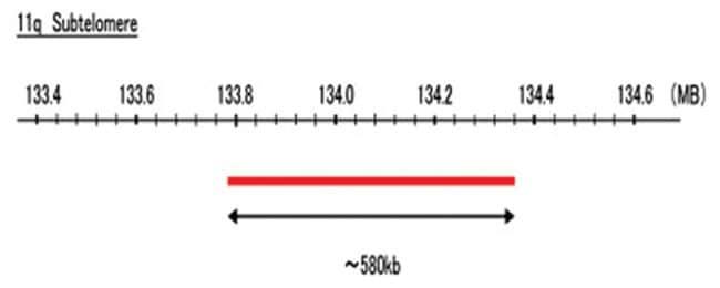 Abnova 11q Subtelomere (R6G) FISH Probe 1 Set:Life Sciences