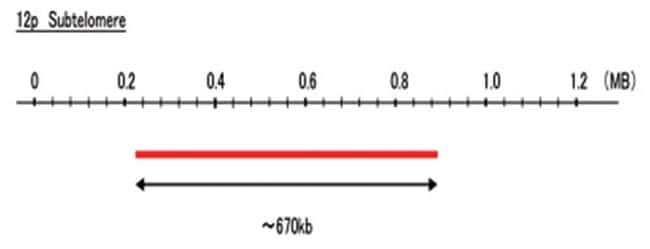 Abnova 12p Subtelomere (FITC) FISH Probe 1 Set:Life Sciences