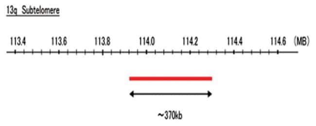 Abnova 13q Subtelomere (FITC) FISH Probe 1 Set:Life Sciences