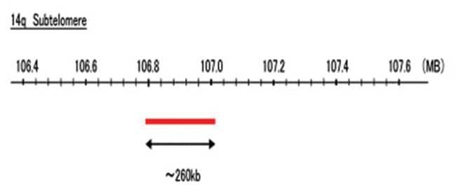 Abnova 14q Subtelomere (R6G) FISH Probe 1 Set:Life Sciences