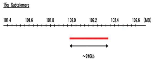 Abnova 15q Subtelomere (Texas Red) FISH Probe 1 Set:Life Sciences