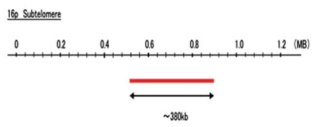Abnova 16p Subtelomere (DEAC) FISH Probe 1 Set:Life Sciences