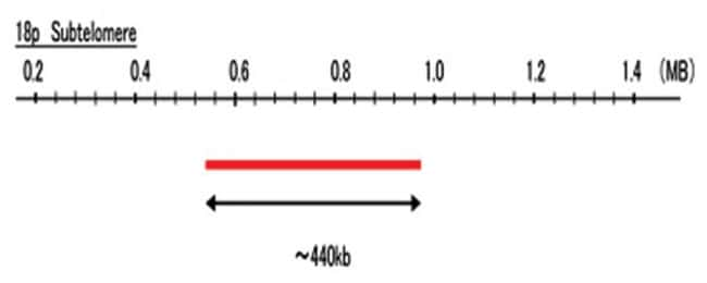 Abnova 18p Subtelomere (R6G) FISH Probe 1 Set:Life Sciences
