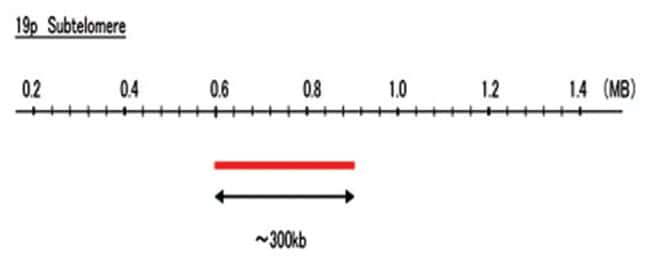 Abnova 19p Subtelomere (R6G) FISH Probe 1 Set:Life Sciences