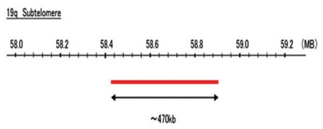 Abnova 19q Subtelomere (R6G) FISH Probe 1 Set:Life Sciences