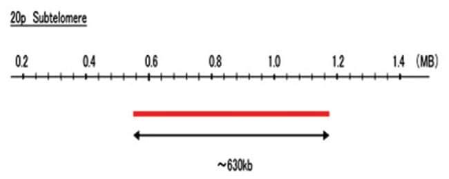 Abnova 20p Subtelomere (FITC) FISH Probe 1 Set:Life Sciences