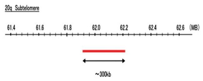 Abnova 20q Subtelomere (R6G) FISH Probe 1 Set:Life Sciences
