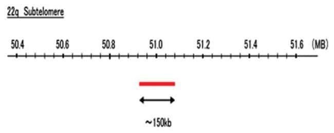 Abnova 22q Subtelomere (Cy5) FISH Probe 1 Set:Life Sciences