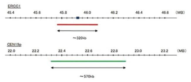 Abnova™ERCC1/CEN19p FISH Probe 200 μL Abnova™ERCC1/CEN19p FISH Probe