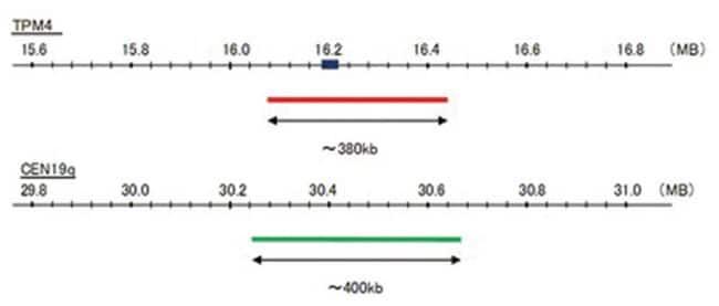 Abnova TPM4/CEN19q FISH Probe 1 Set:Life Sciences