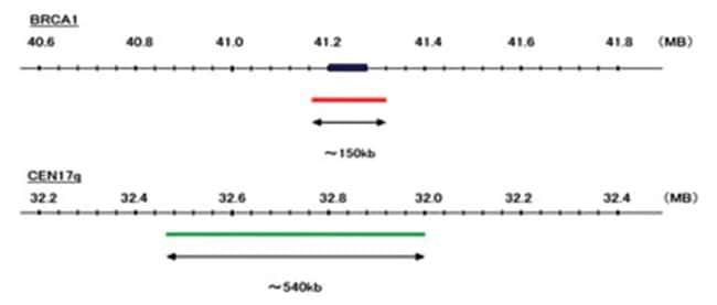 Abnova™BRCA1 /CEN17q FISH-Sonde Quelle: Genomische DNA Abnova™BRCA1 /CEN17q FISH-Sonde