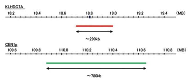Abnova™KLHDC7A/CEN1p FISH Probe 200 μL Abnova™KLHDC7A/CEN1p FISH Probe